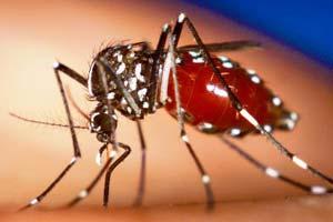 dengue_mosquito-destaque